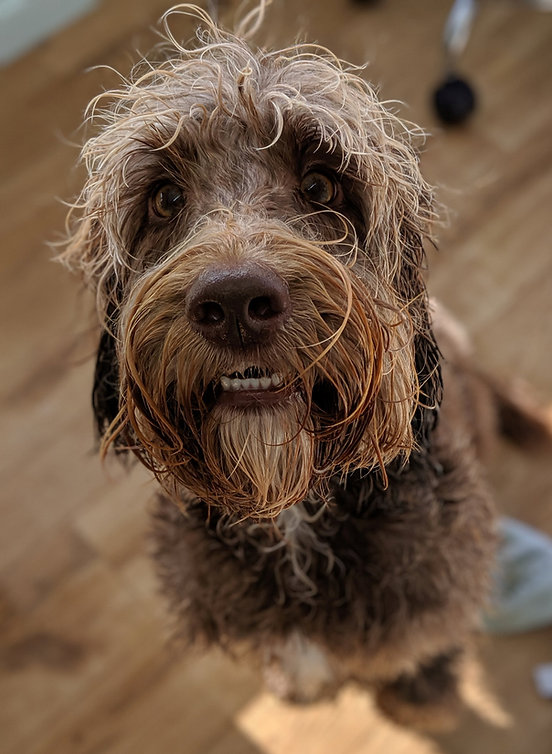 little dog cabin dog grooming galashiels scottish borders
