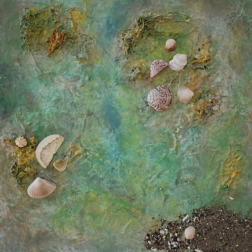 """Collector's Cove   16""""x 16"""""""