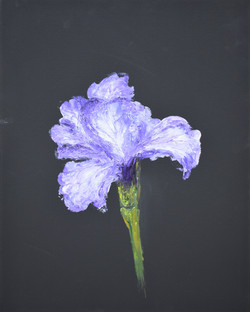 Iris 12 x 16 2019