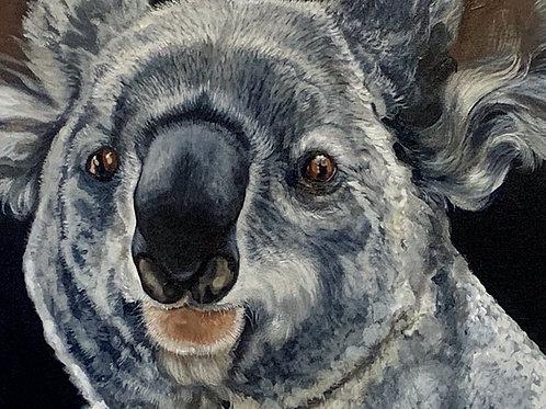Kevi Koala