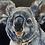 Thumbnail: Kevi Koala