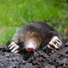 Problems Moles Cause