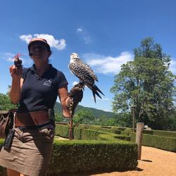 Falconry show