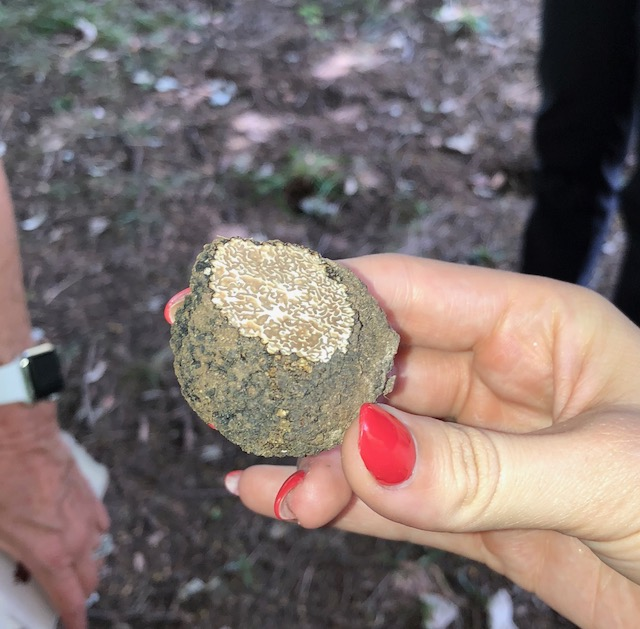 Now that's a truffle!