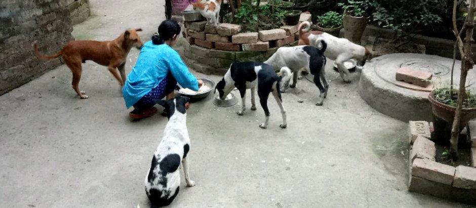 Animal welfare Volunteering