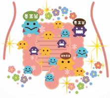 【Column No.18】あなたの腸を美しく 腸内環境改善計画
