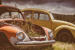 Volkswagons at Rest