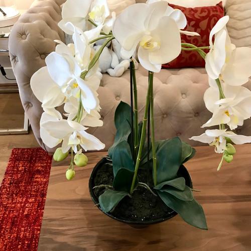 Silk flowers plants home accessories the design studio london phalaenopsis orchid in black pot mightylinksfo