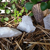 Three clear quartz with money tree.jpg