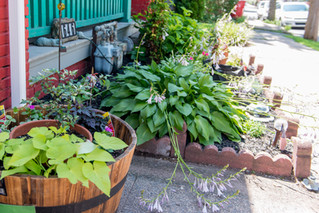 Home Garden Contest in Pottstown expands into Boyertown