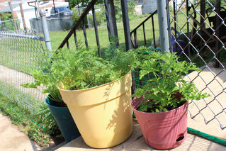 Pottstown, Boyertown residents can cash in with Home Garden Contest