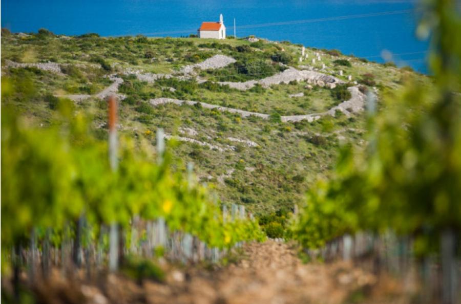 Kairos vineyards above Trogir Croatia