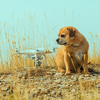 Lily and Drone.jpg