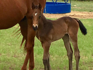 We have a new filly!