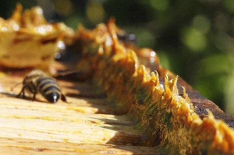 visitas cursos apicultura colmenas alava apadrinar