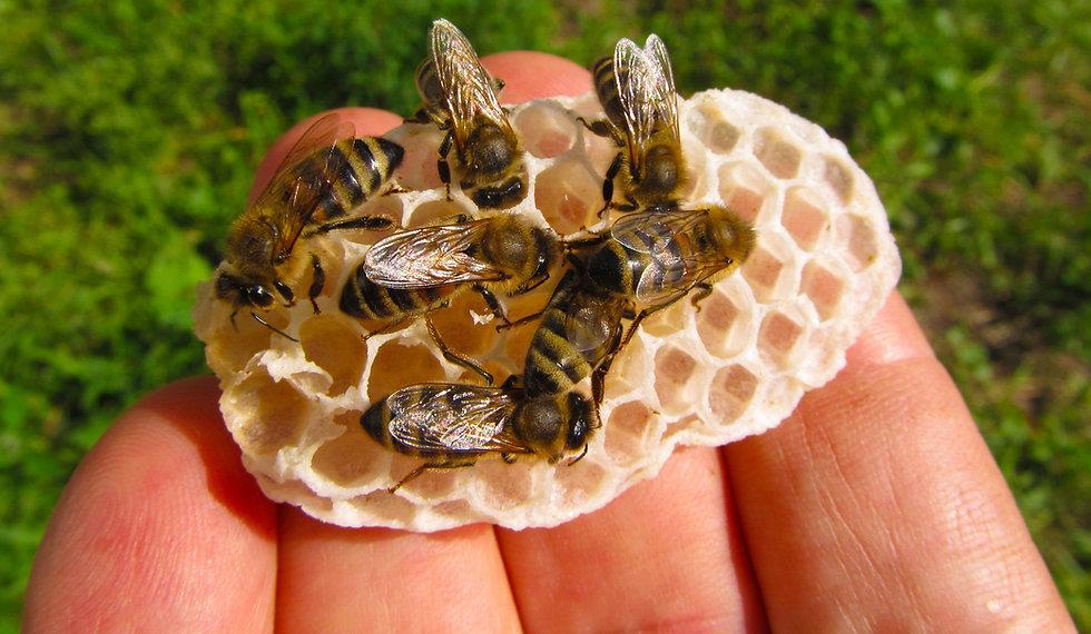visitas apicolas en alava, charlas miel apadrinar ecocolmena abejas apicultura