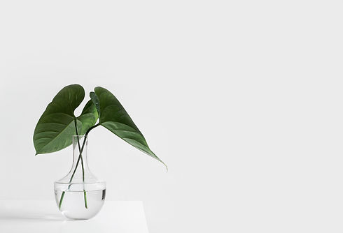 green plant in vase with white background