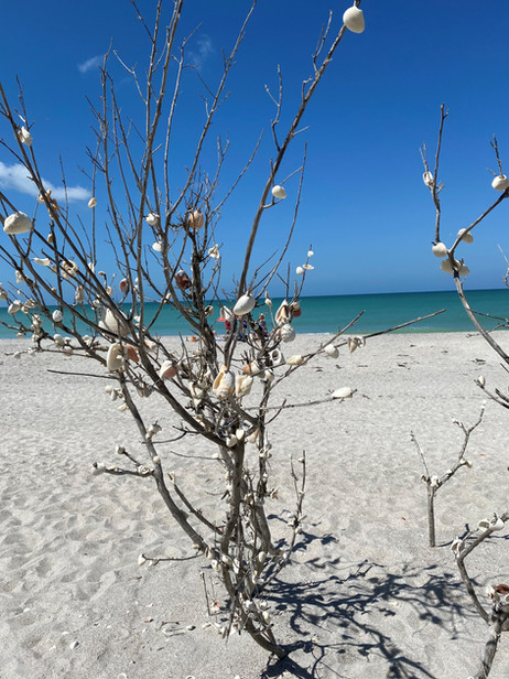 shell tree on the beach