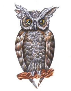 """Copic Owl, 2014; 11x14"""""""