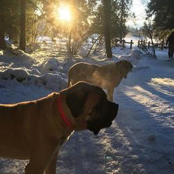 #bxdogpark #afternoonwalk #sunnydays #ma