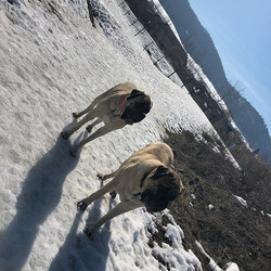#ithinkspringishere #puppyparkafternoon