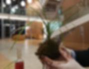 atelier-kokedama-safran.JPG
