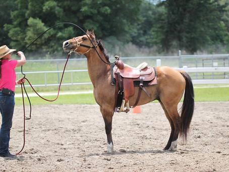 Exposing a Horse