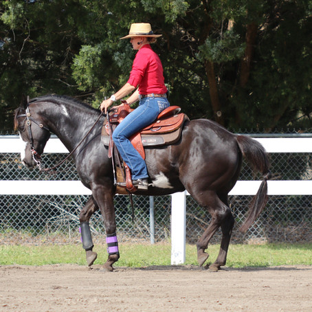 Horse Education: Kalley's Balanced Horse Training philosophy