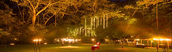 lights in the rainforest.jpg