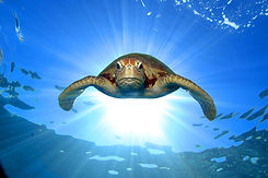 20. Turtle.jpg