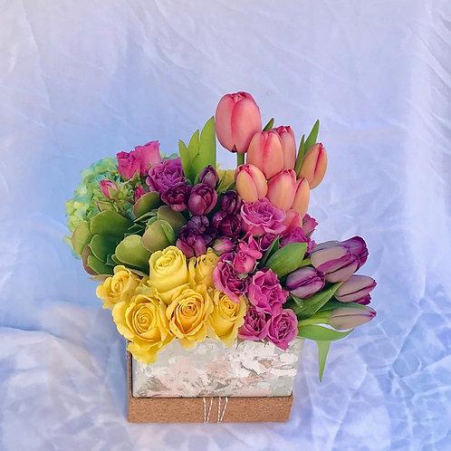 Tulip Rose Magic