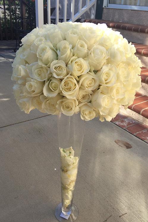 White Rose Beauty-White Tibet Rose