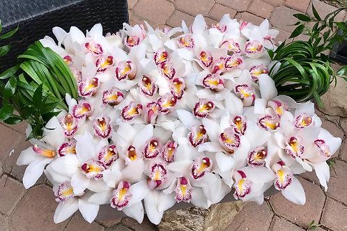 Cymbidium Orchid Tray