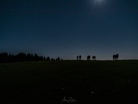 Night Horse1.jpg
