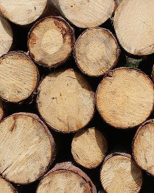 rondins bois.jpg