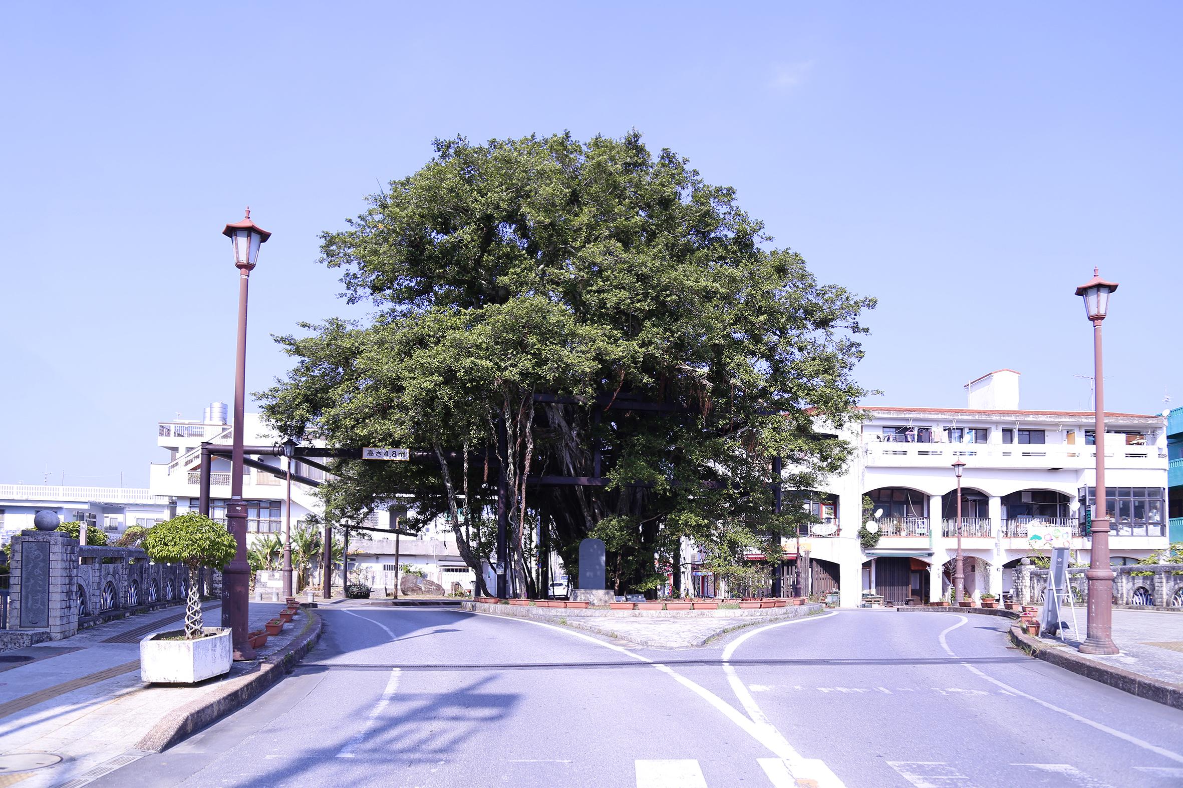 名護市のシンボル(ひんぷんガジュマル)