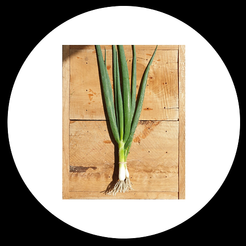 Spring Onions Bunched