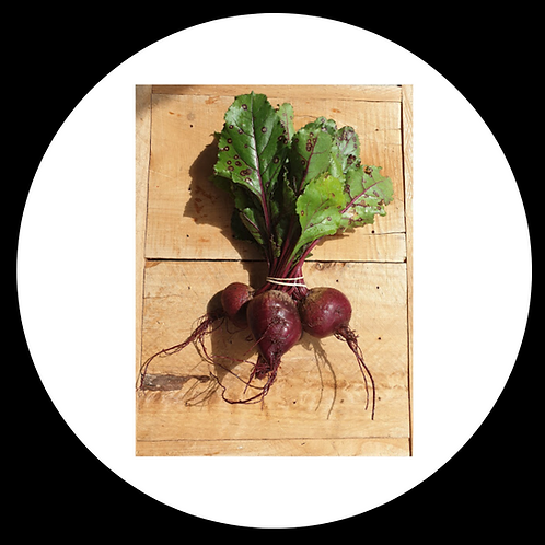 Beetroot Bunched