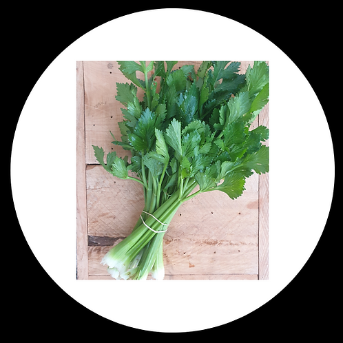 Celery Bunched