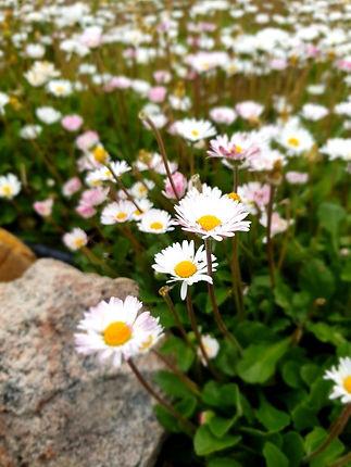 Jurlique flowers.JPG