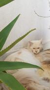 Katinss (2).jpg