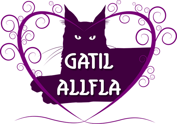 Gatil Allfa Maine Coons