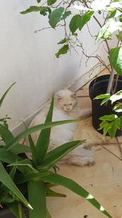 Katinss (4).jpg