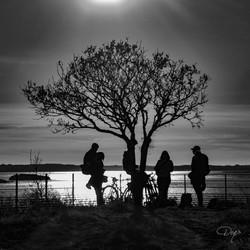 L'arbre rassembleur
