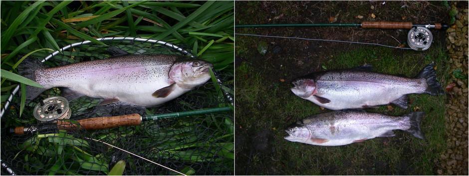 Linlithgow Loch Catch report - 13/10/19