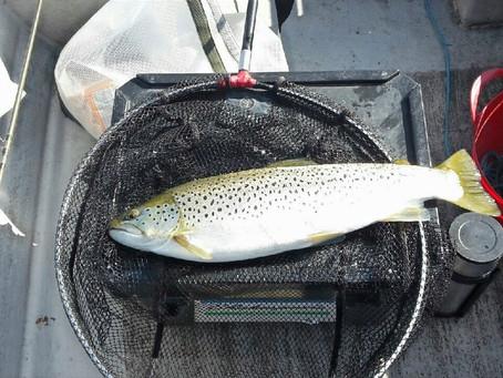 Linlithgow Loch Catch Report - 10/04/2021 - 16/04/2021