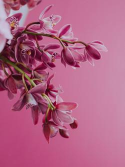 TILLDA FLOWERS