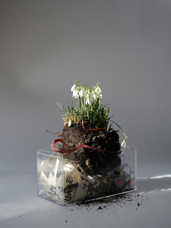 Snowdrops and Earthworms