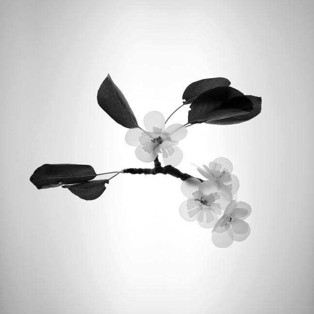 Pear Blossom, 2017