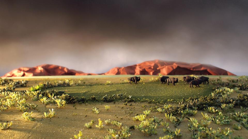 Roaming Bison 2012